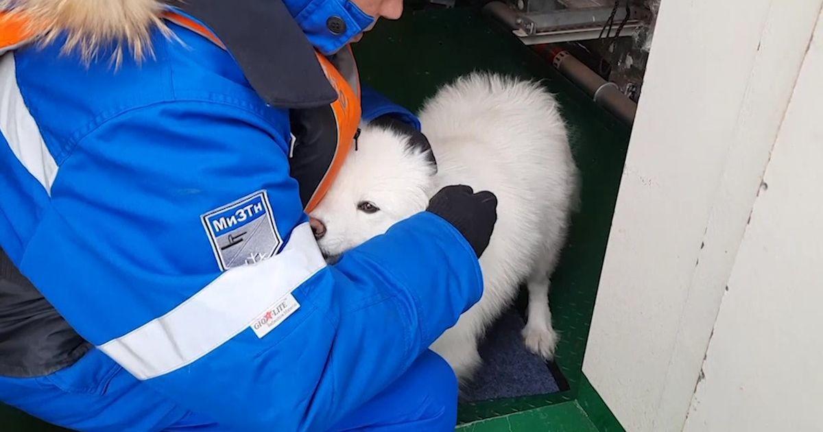 Reporter: Nädal aega jääväljadel hulkunud koer päästeti Vene jäälõhkujaga