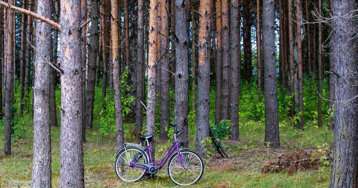 Jahimees tappis Soome rahvuspargis kogemata ratturi