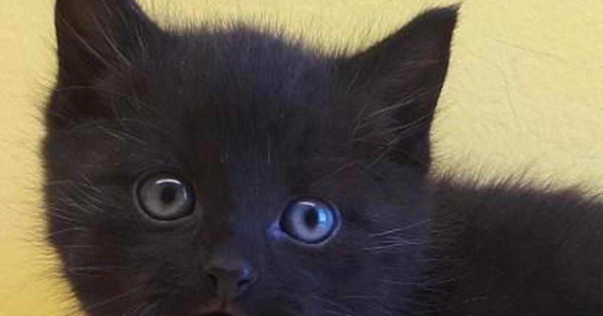 Püünisesse kinni jäänud kassi elu ei õnnestunud päästa