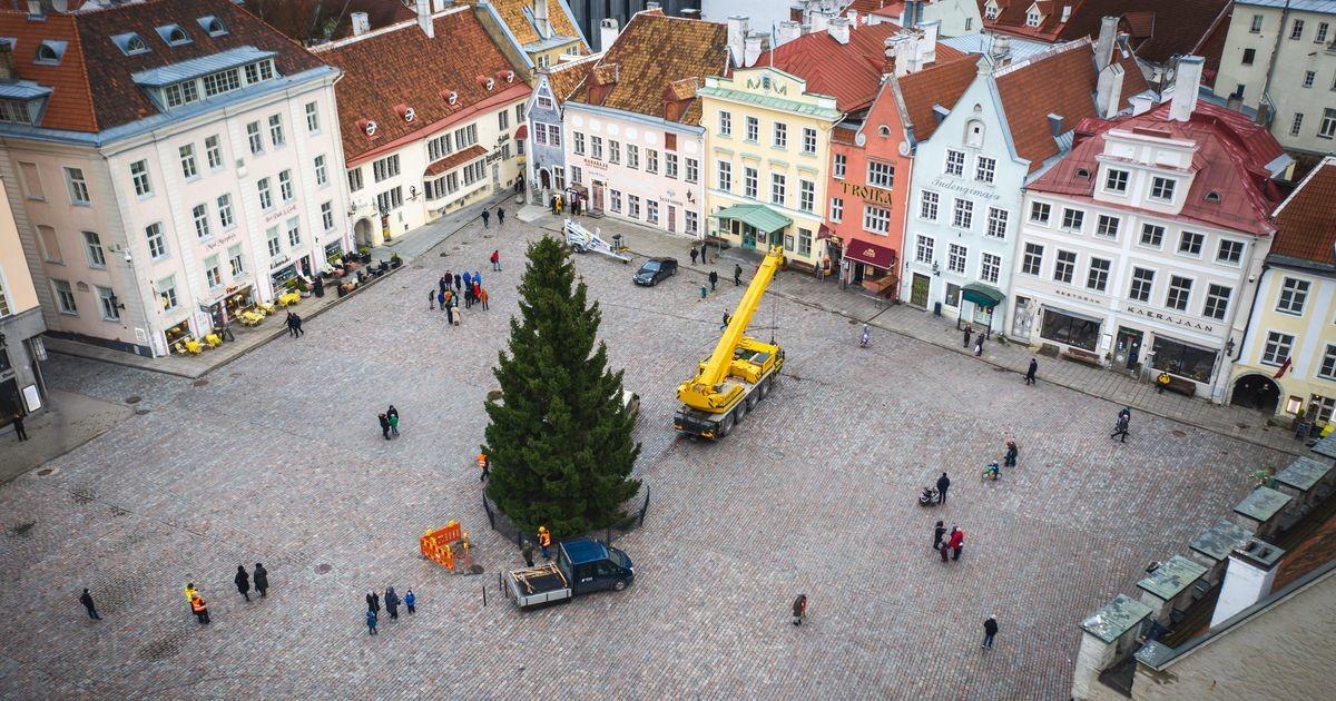 Jõulukuusk saabus Tallinna Raekoja platsile