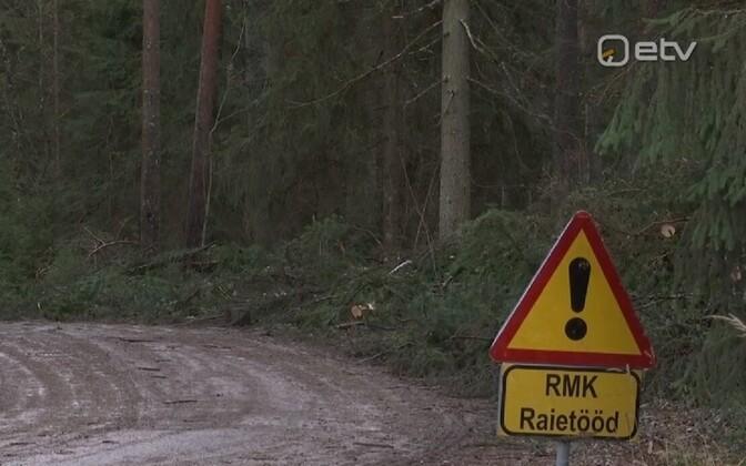 RMK alustab raietöid Palojärve äärses metsas