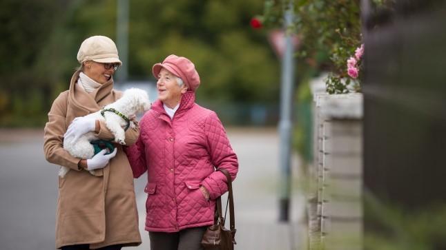 Lemmikloom: eakate liikumisaktiivsuse võti