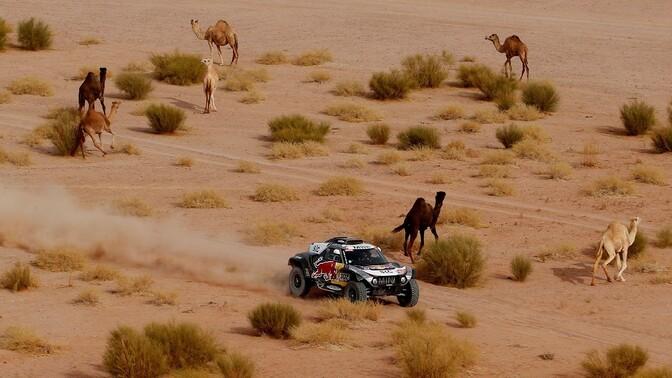 Peterhansel sõidab 14. Dakari võidu suunas, tsiklite üldliider katkestas
