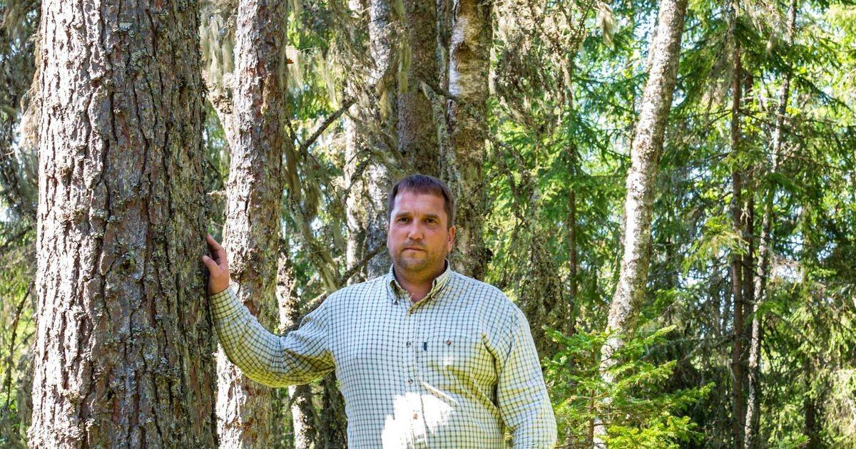 Metsafirma peatas raietöö ligi 80 kohas, kahjunõue riigile võib kerkida 1,5 miljoni euroni
