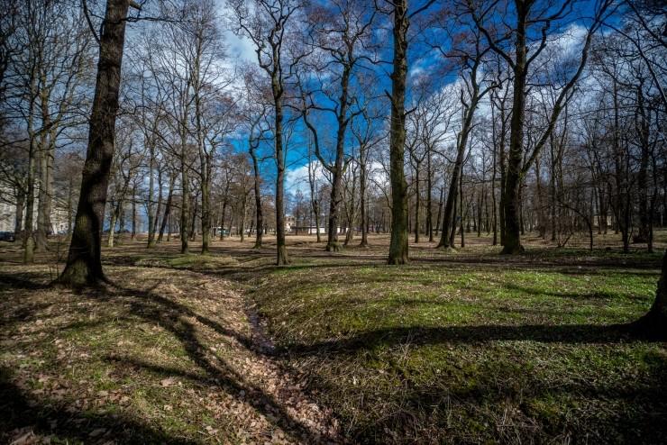 Iidse Kopli metsa järglasest Süsta park rõõmustab  linde saja uue põõsaga