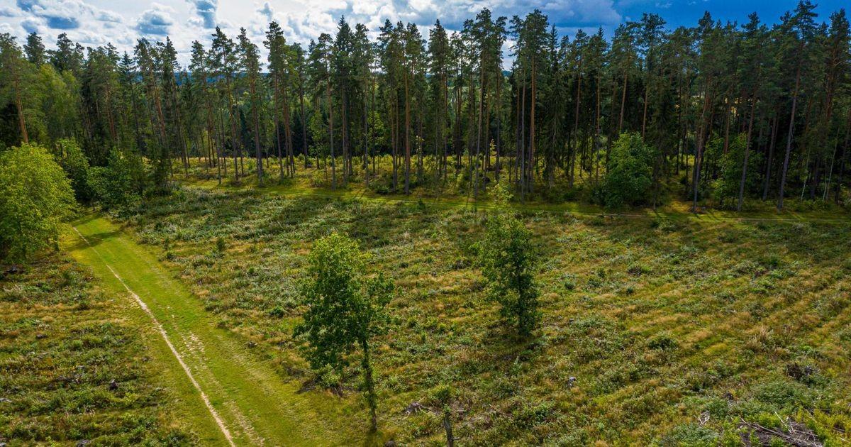 Valitsus plaanib kiirkorras seadustada metsaandmete salastamise