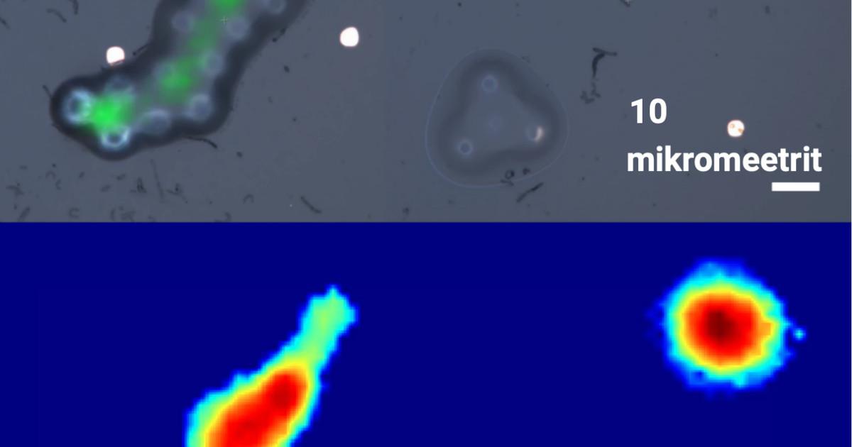 Ehitati paljulubav nanosonar – vähirakud, värisege!