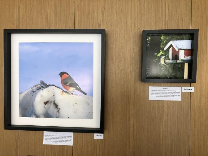 Fotograaf avas Haapsalus näituse aialindudest