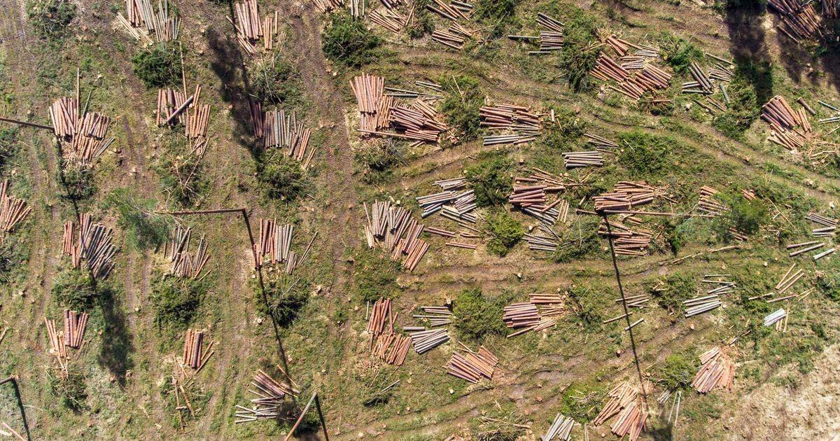 Kaitsealust metsa hävitati keskkonnaministeeriumi loal