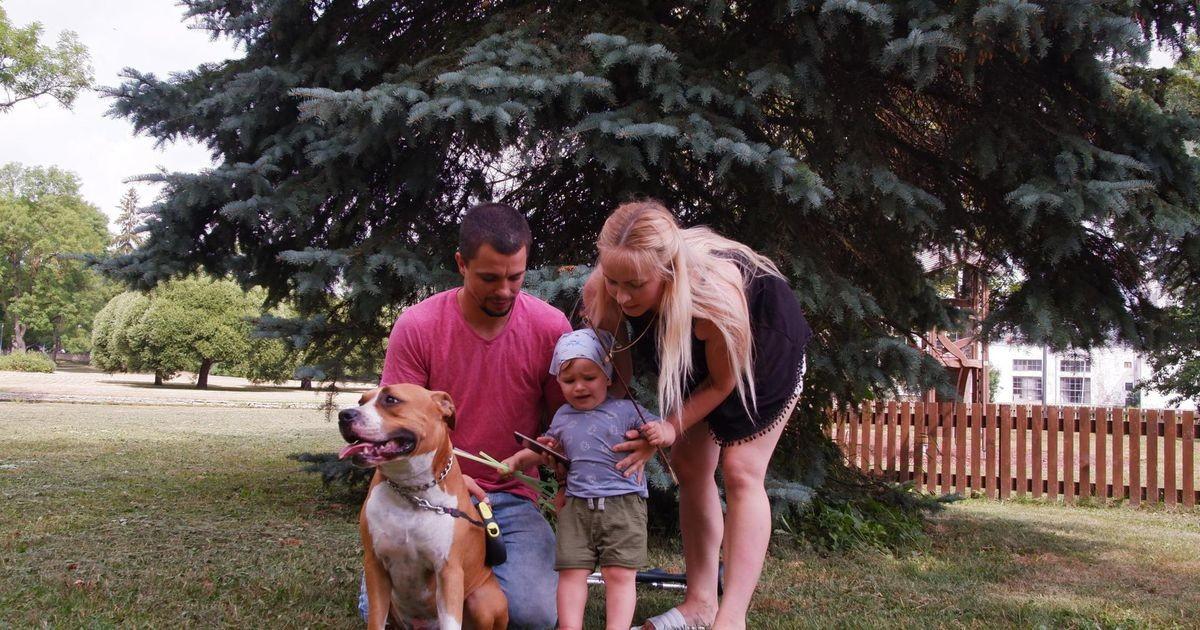 Koeraomanik: ameerika staffordširi terjer on lapse suurim sõber