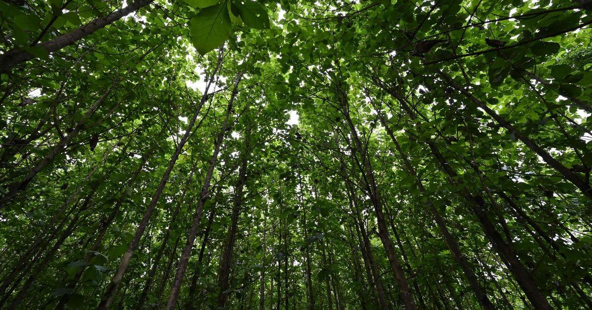 Puude istutamine võib õõnestada kliimakriisi vastast võitlust, hoiatavad teadlased