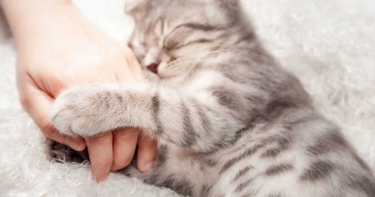 Üllatavalt lihtsad nipid, millega sulatad iga kassi südame