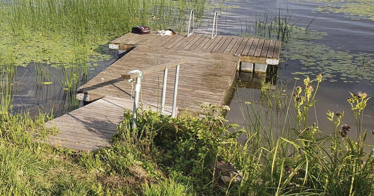 Viljandi järve paadisillal lebasid mürgitatud kassid