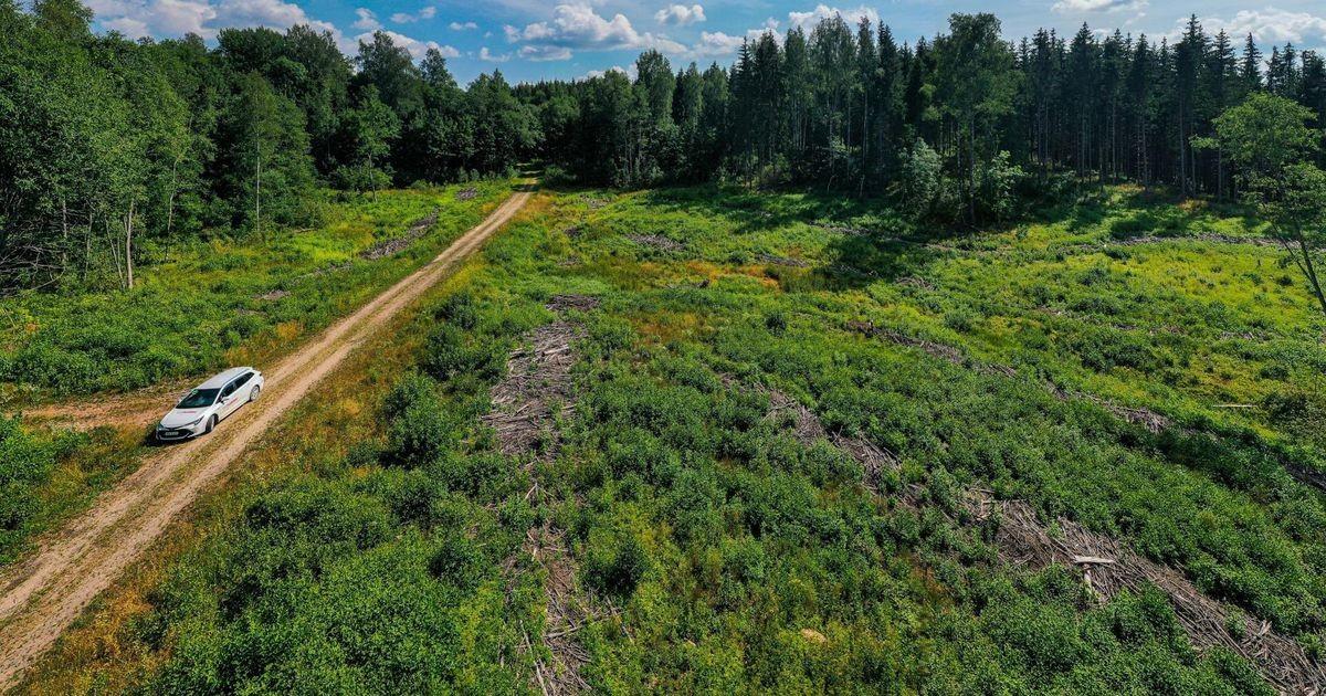 Eestit ähvardab kaitsealade paljaksraiumise eest trahv 100 000 eurot päevas nagu Poolat