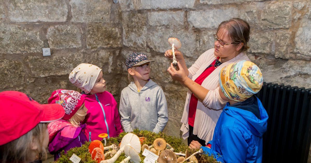 Muuseum tähistab seenekuud seenenäituse ja metsaretkedega