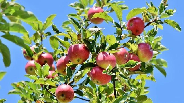 NIPID | 5 head soovitust, kuidas õunu säilitada