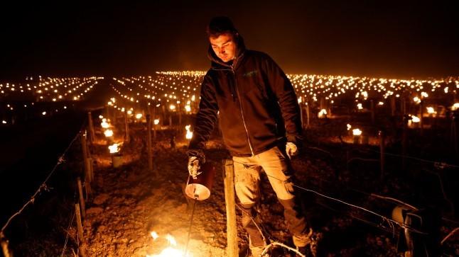 Prantsuse viinamarjaistandustes põlesid öösel tõrvikud
