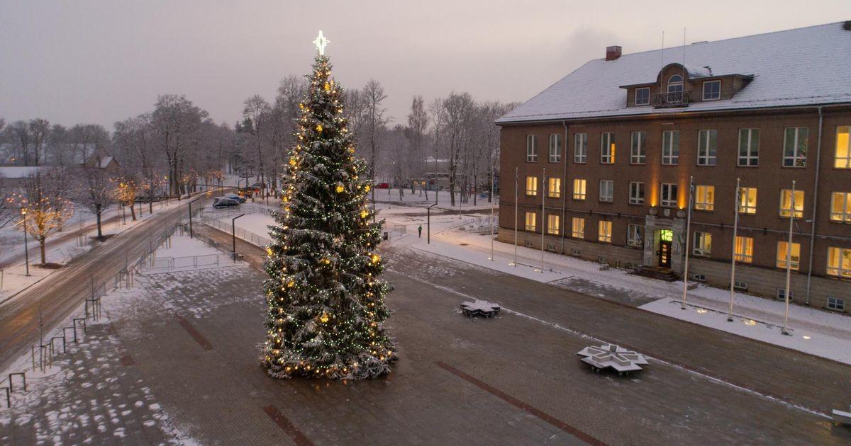 Viljandi otsib jõulupuud