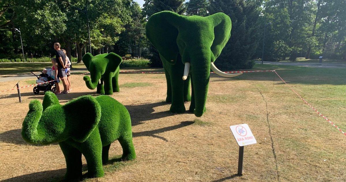 Populaarseks saanud elevantidel keelati turnimine