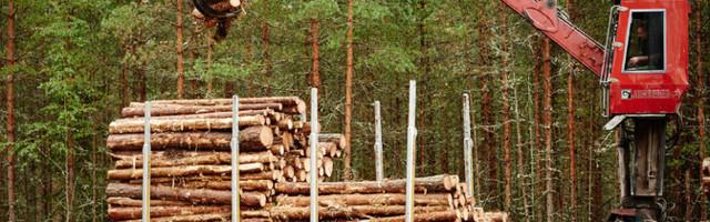 Kohus peatas metsaraie Natura 2000 aladel