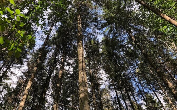 Ettekujutus eestlasest kui metsarahvast sündis nõukogude ajal