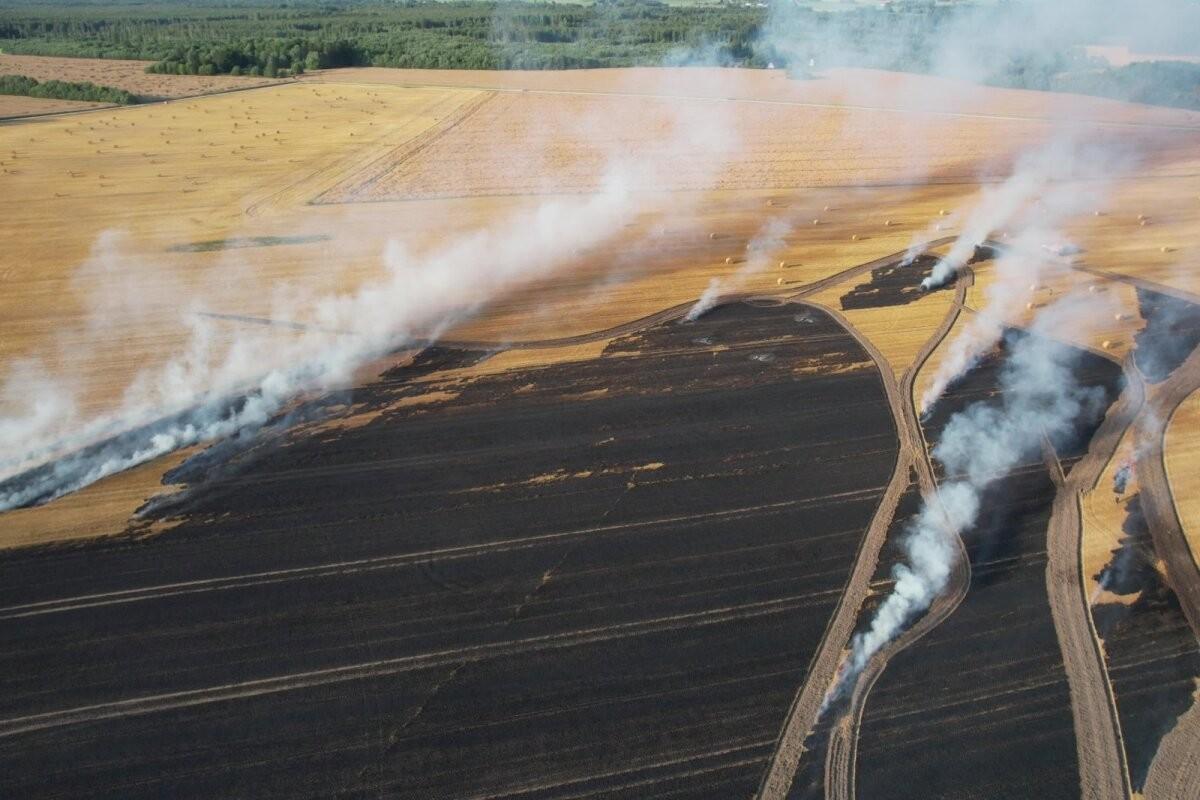 VIDEO ja FOTOD   Jõgevamaal põles viljapõld kaheksa hektari ulatuses, tuld kustutasid mitme maakonna päästjad
