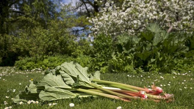 Naistelehe köögiuudised: söö targalt, palun ära söö rabarberilehti ning tunne säilivusmärgistusi