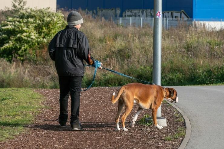 VIDEO: Kristiinesse tulevad koeraomanikke kiitvad sildid