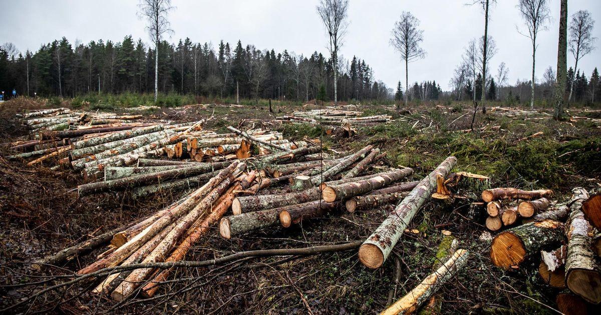 Euroopa Komisjon nõuab Eestilt kaitsealuse metsa hävitamise lõpetamist