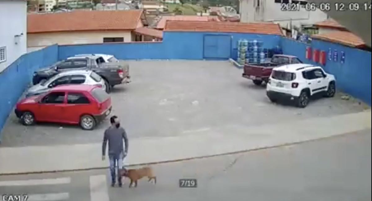 VIDEO: Koer jookseb ülekäigurajal jalakäija pikali