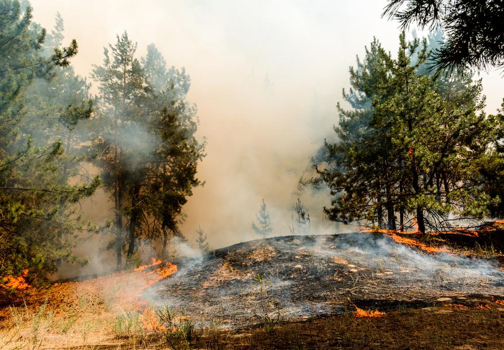 Pärnumaal põleb ligi 30 hektarit raba, tugev tuul kannab tulekahju kiiresti edasi