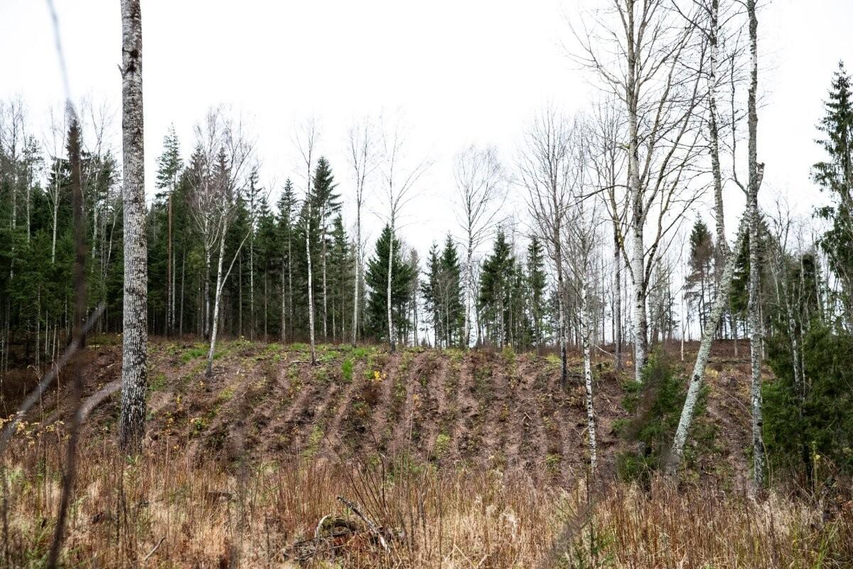 Ministeerium lubas Euroopa süüdistustele vastuseks looduskaitseseadust muuta