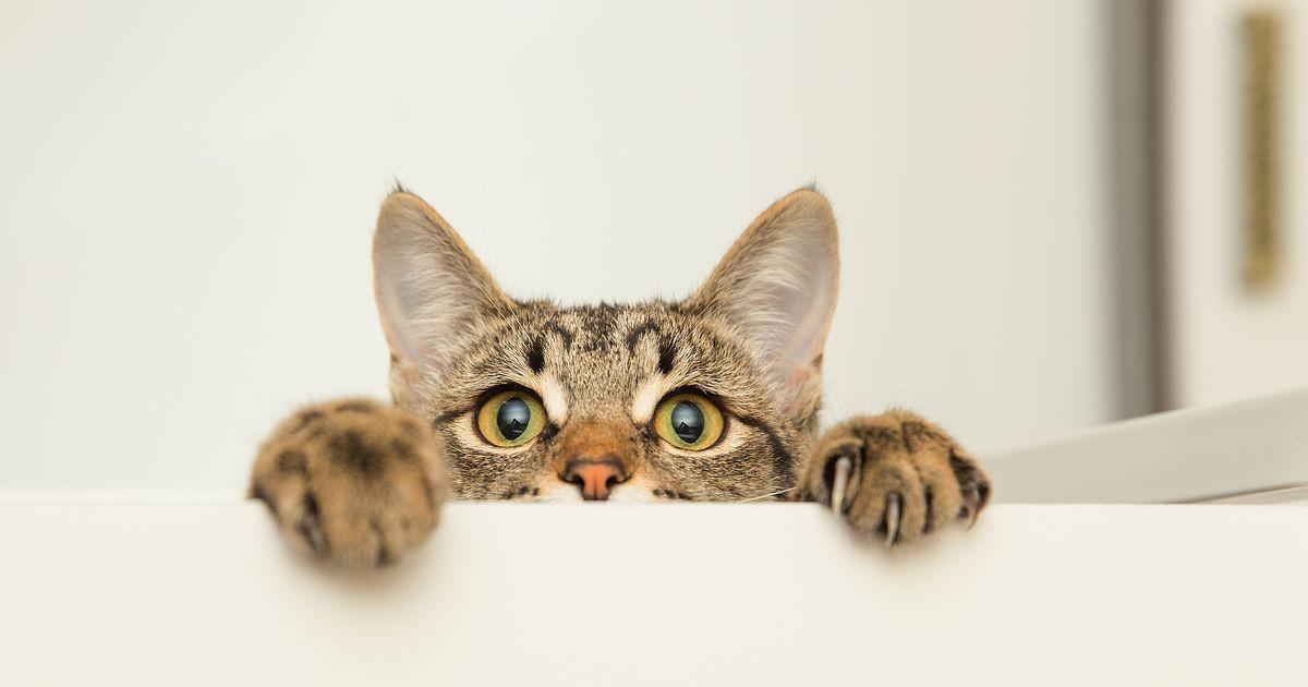 Üllatav põhjus: kassid nurruvad, sest...