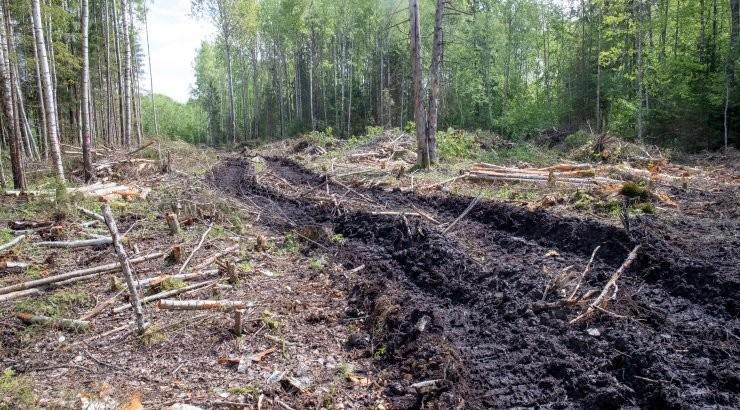 Uuelt valitsuselt oodatakse korra taastamist looduskaitsealadel