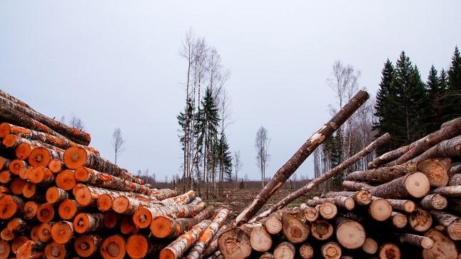 Metsandusuudiseid   Palgi hind läheb endiselt üles, küttepuit rekordiliselt odav