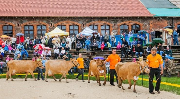 Facebook takistab Eesti maaelu? Haruldast tõugu Eesti lehmadele uue peremehe otsimine lõppes blokeeringuga sotsiaalmeediast